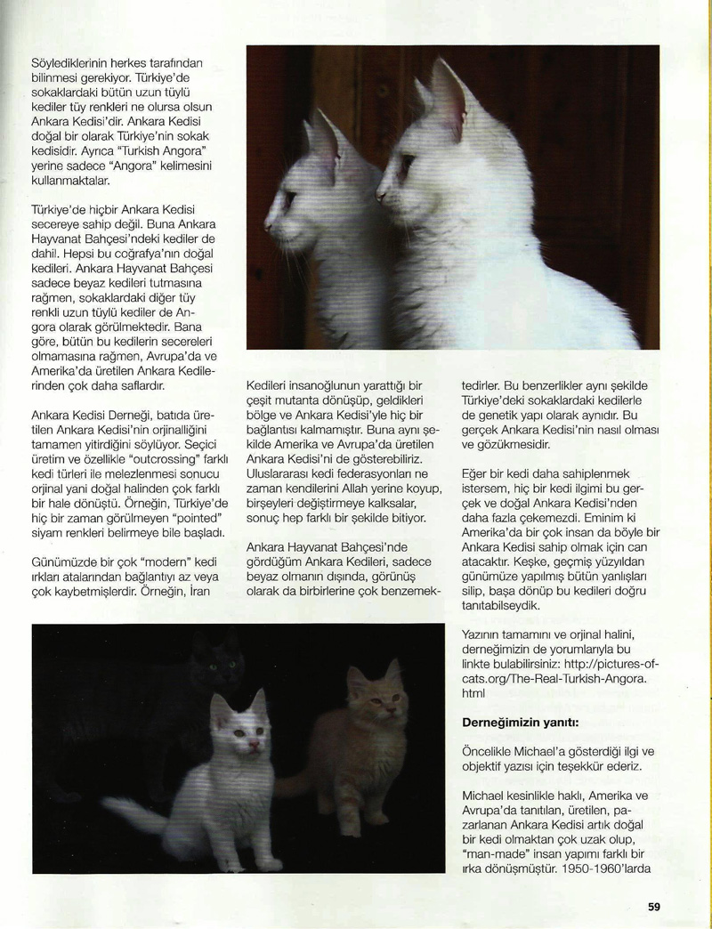The Real Turkish Angora 2