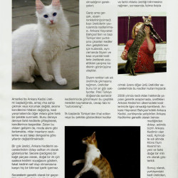The Real Turkish Angora 3