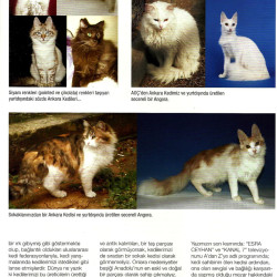 The Real Turkish Angora 4