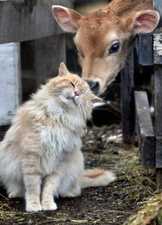 Barn cat and young coaw friend