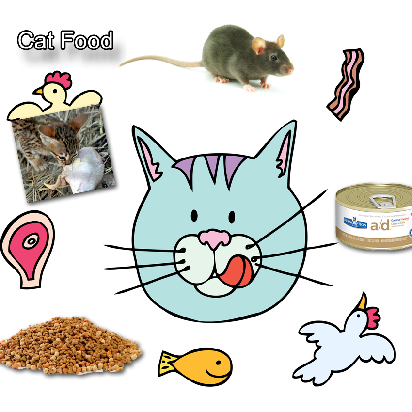 Cat Food Facts For Kids