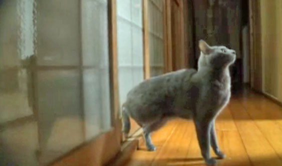 Cat Knocking On Door : Cat learns to knock on door and finds it effective