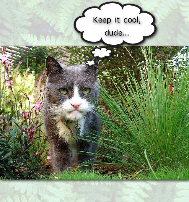 Control freaks are not good cat caretakers