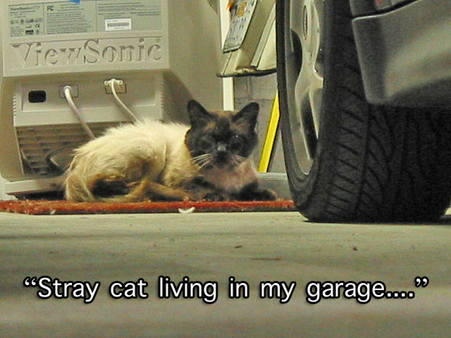 Stray cat living in my garage