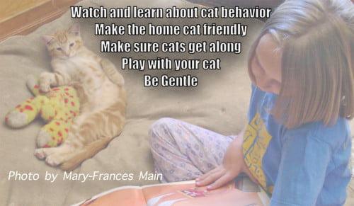 Pregnant wild cat behavior