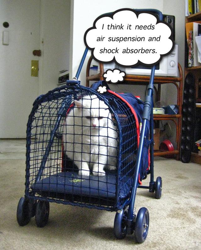 Cat Strollers. A good idea?