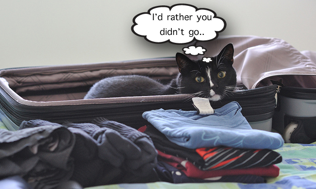 Taking your cat on holiday or leaving him behind
