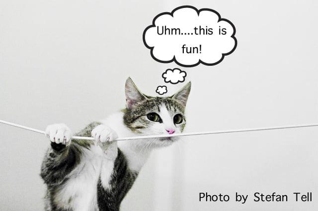 Stimulated Cat