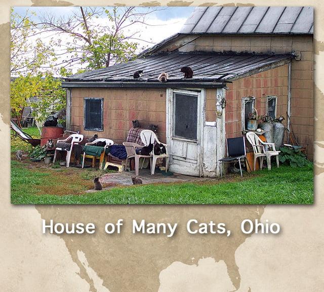 Cat population statistics