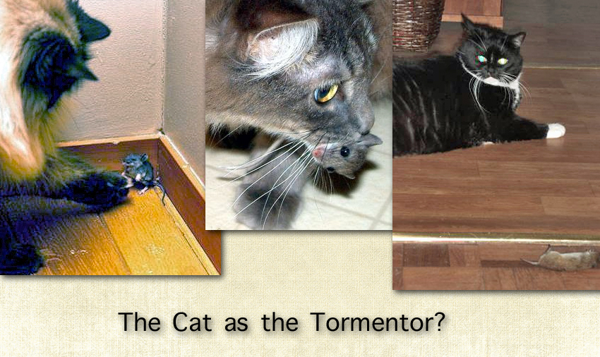 The cat as the tormentor