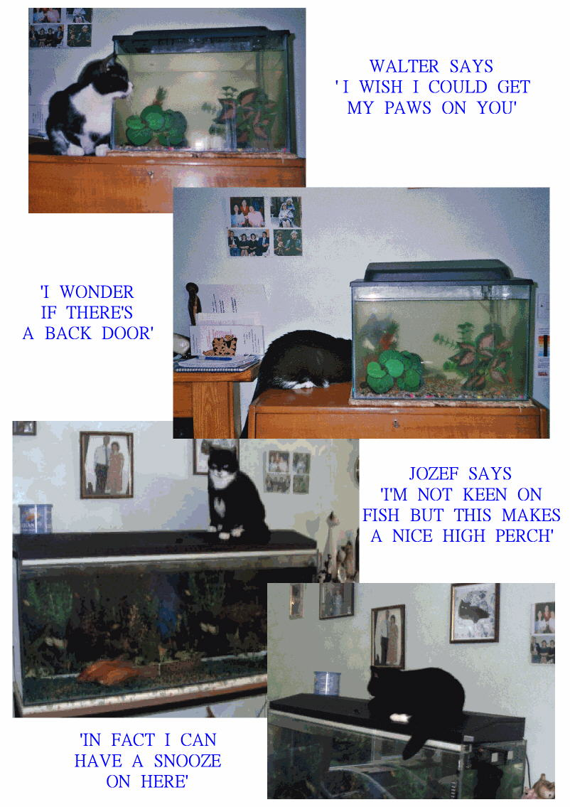 Cats and Goldfish