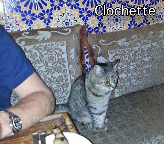 Clochette a geriatric French cat