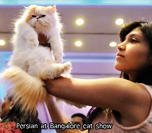 India first cat show