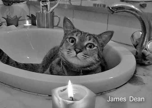 James Dean Cat