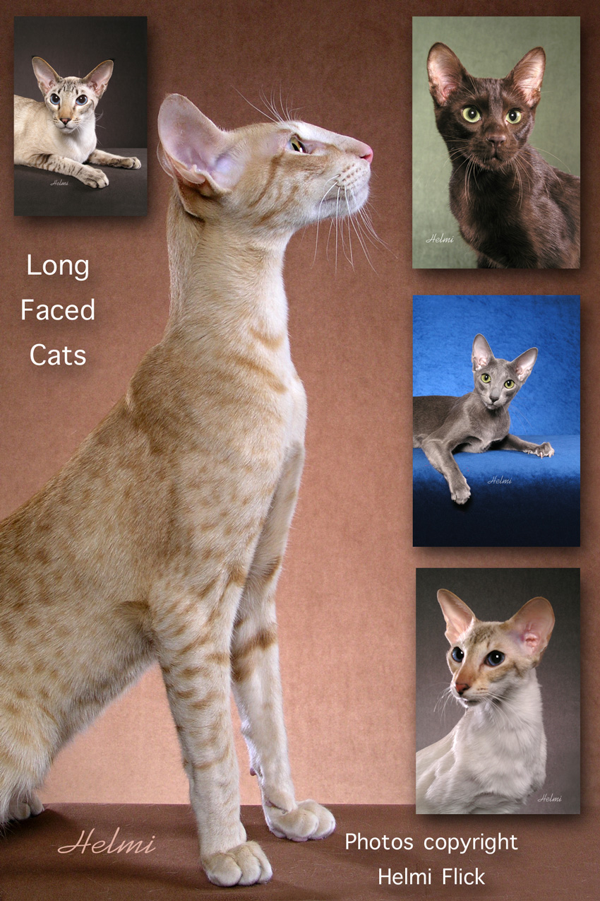 Long faced cats pictures (collage)