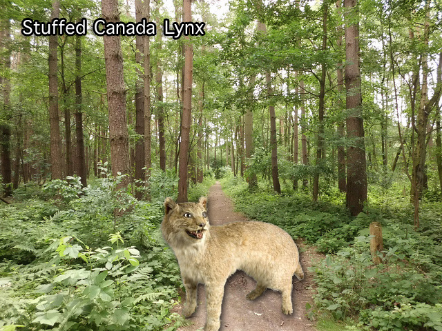 Stuffed Canada lynx UK