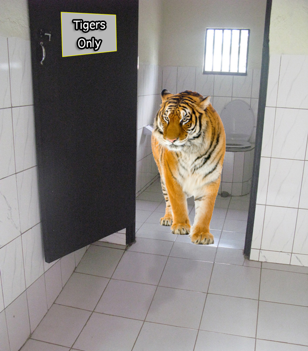 Tiger in the toilets
