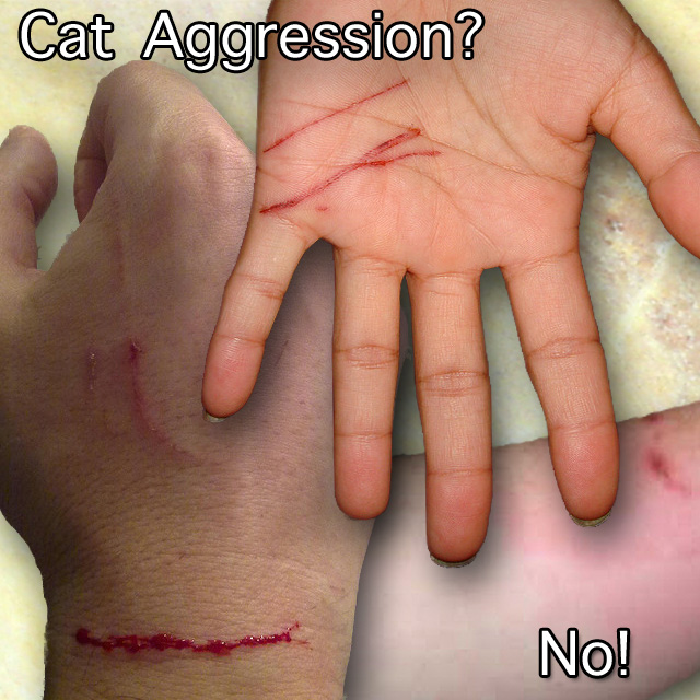 Unprovoked cat aggression attack?