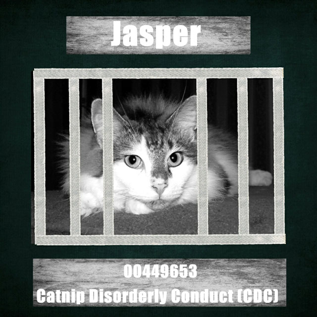 Catnip disorderly conduct