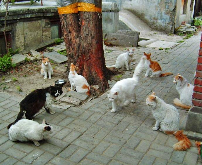 beijing-cats-10