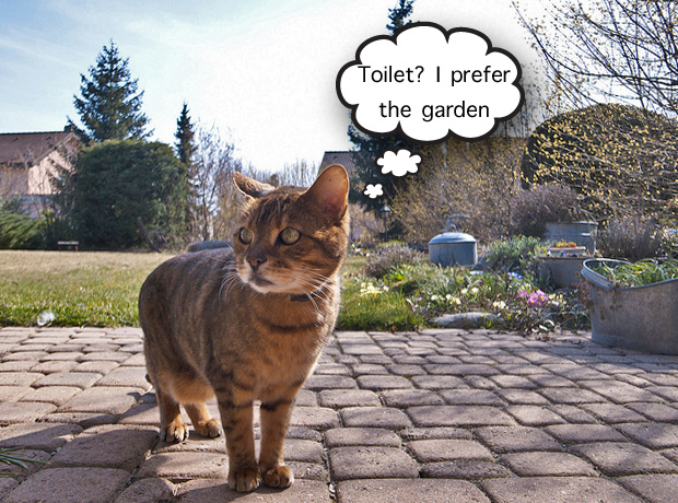 Cat using a garden as a toilet