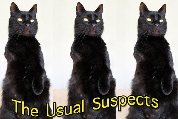 Identifying Your Cat