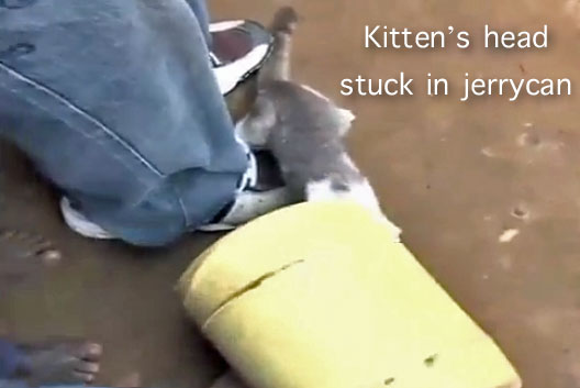 Kittens head stuck in jerrycan