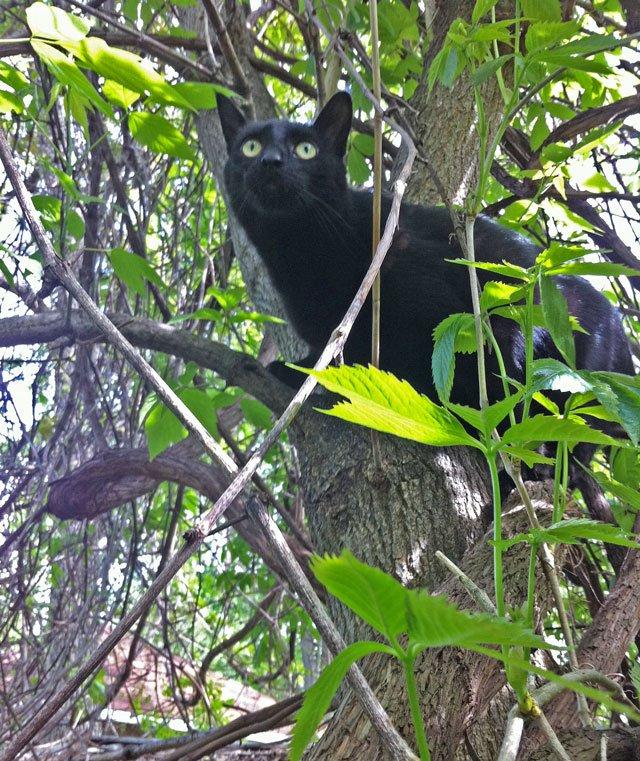 Monty in a Tree