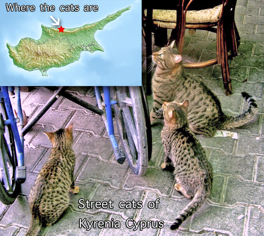 Spotted street stray cats of Cyprus