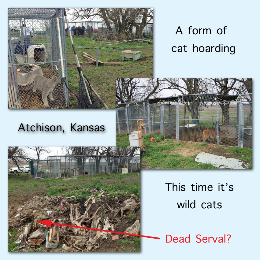 Wild Cat Hoarding. Photos by Big Cat Rescue? Or is it the Humane Society of the United States. I will presume in the interests of wild cats that publication on PoC is allowed.