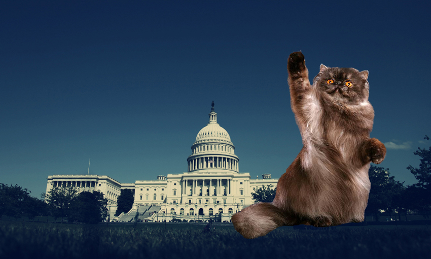 Declaw petition Washington DC