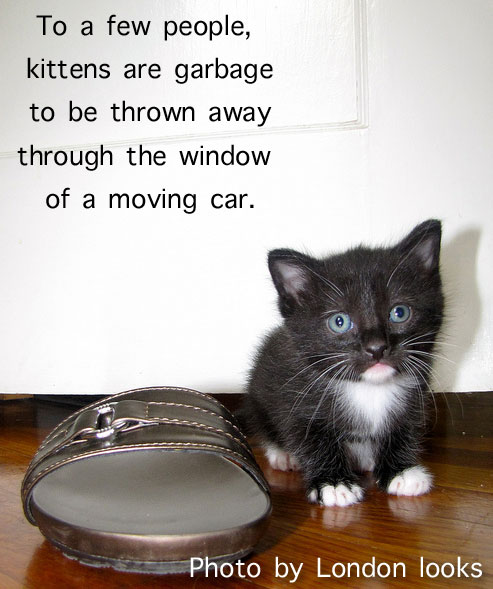 Kitten garbage