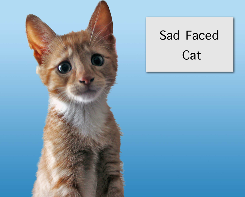Sad Faced Kitten
