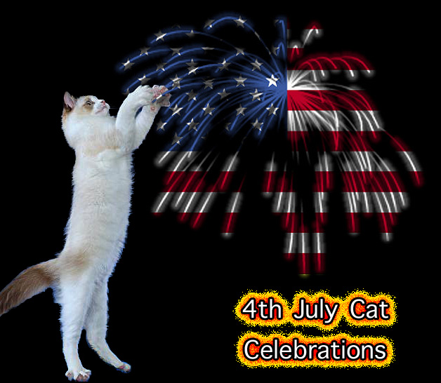 4th July celebrations for the cat