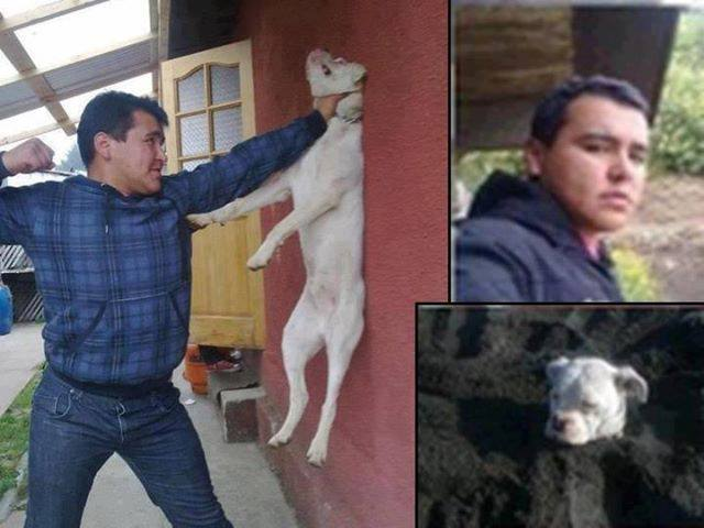 Man punches a dog. Horrendous Image