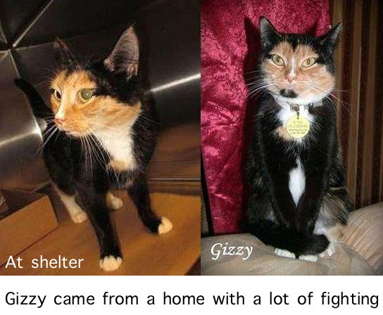 Cat came from a home with a lot of fighting