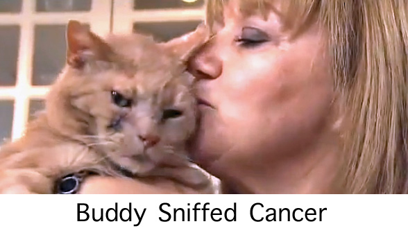 Buddy Sniffed Cancer in His Owner