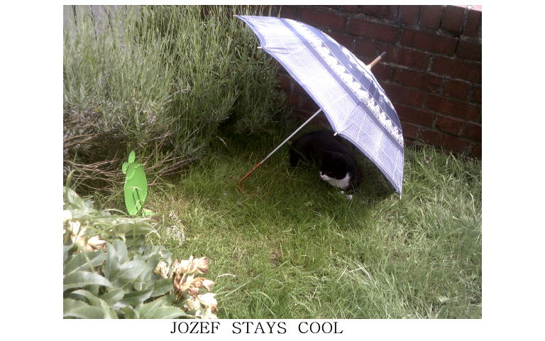 cat Jozef keeping cool