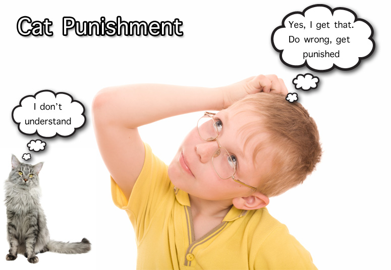 For Kids - About Cat Punishment
