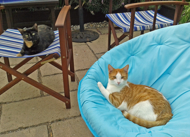Rehomed rescue cats Poppy and Dillon