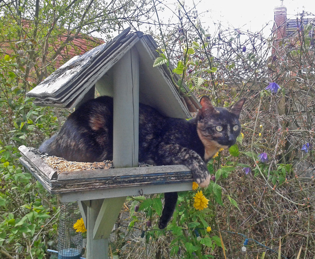 Rehomed rescue cat Poppy