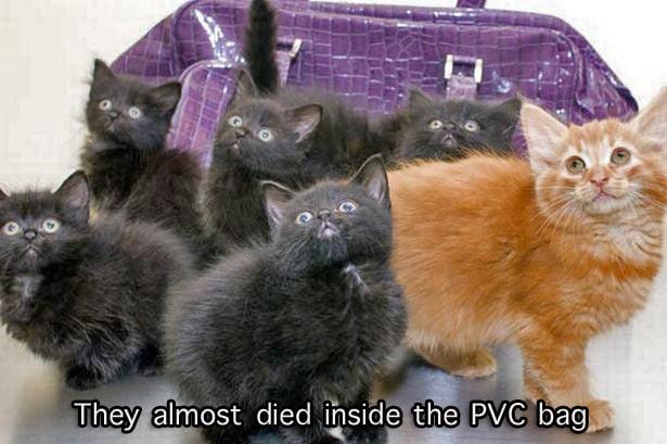 Trash Bag Kittens