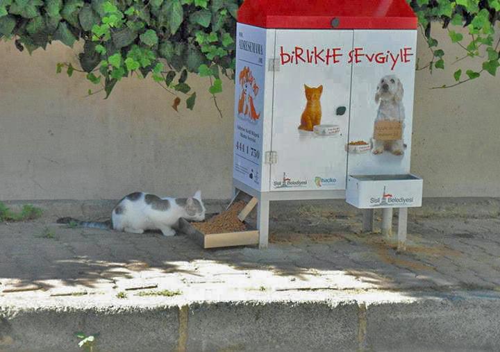 Turkish Stray Cat