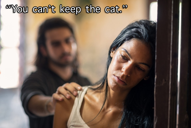 You can't keep your cat