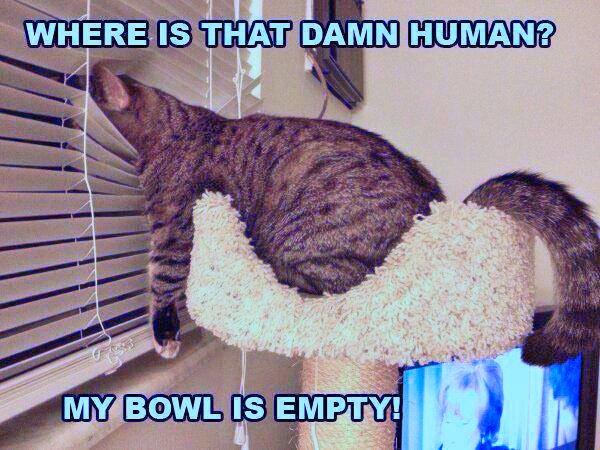 cat-waits-for-human-companion
