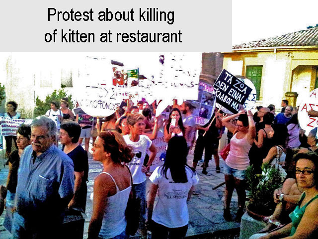 Protest at killing of kitten in Cyprus restaurant