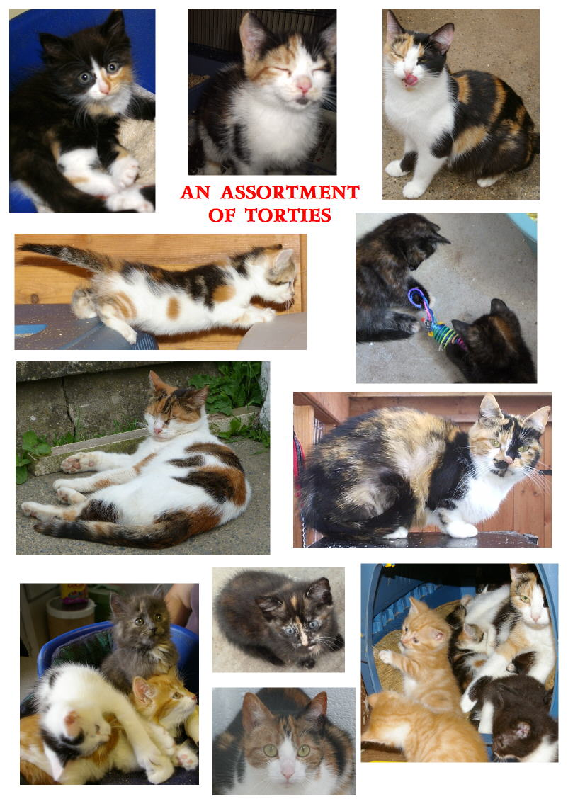 Kays Hill Torties Past and Present