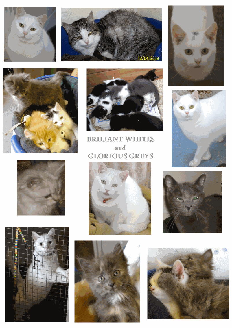 White and grey cats