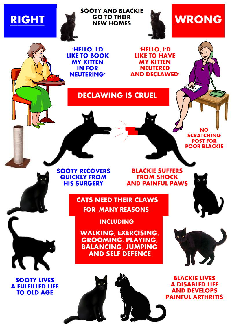 Declawing Kittens is totally wrong