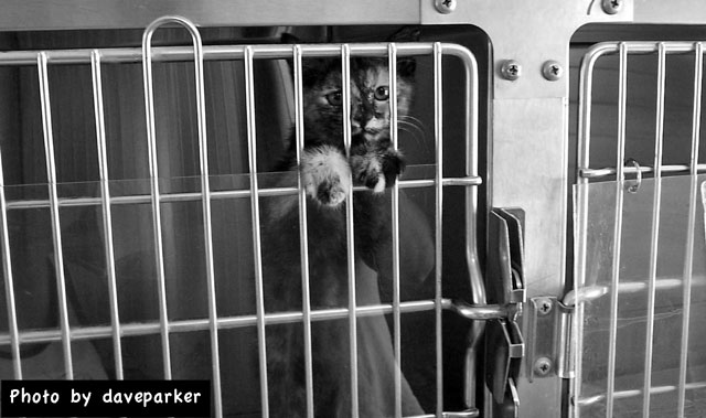 Animal shelter cat in a cage